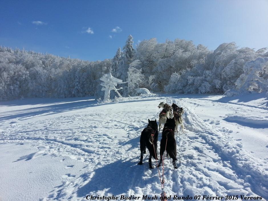 Vercors chiens de traineau