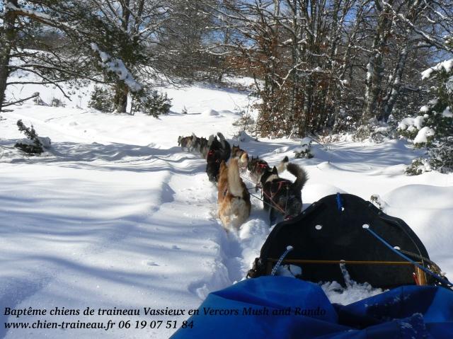 Baptême chiens de traineau Vassieux 1