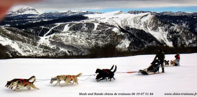 Vercors chiens de traîneau avec Mush and Rando