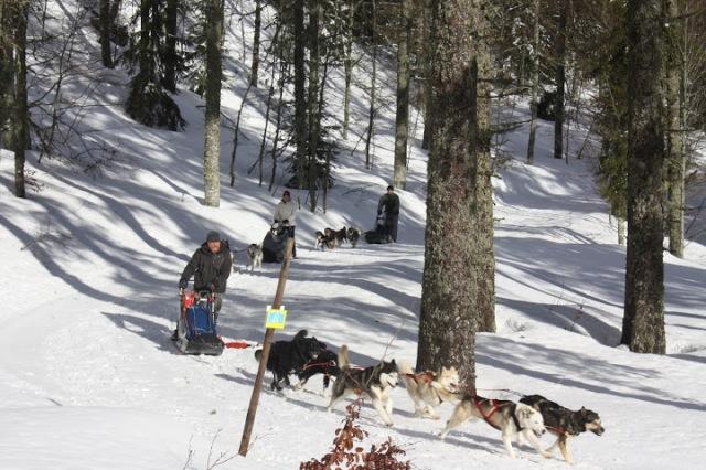 Simple balade ou à la recherche des sensations, individuel ou en famille, chacun sera séduit par l'activité de chiens de traîneau durant toute la saison d'hiver.